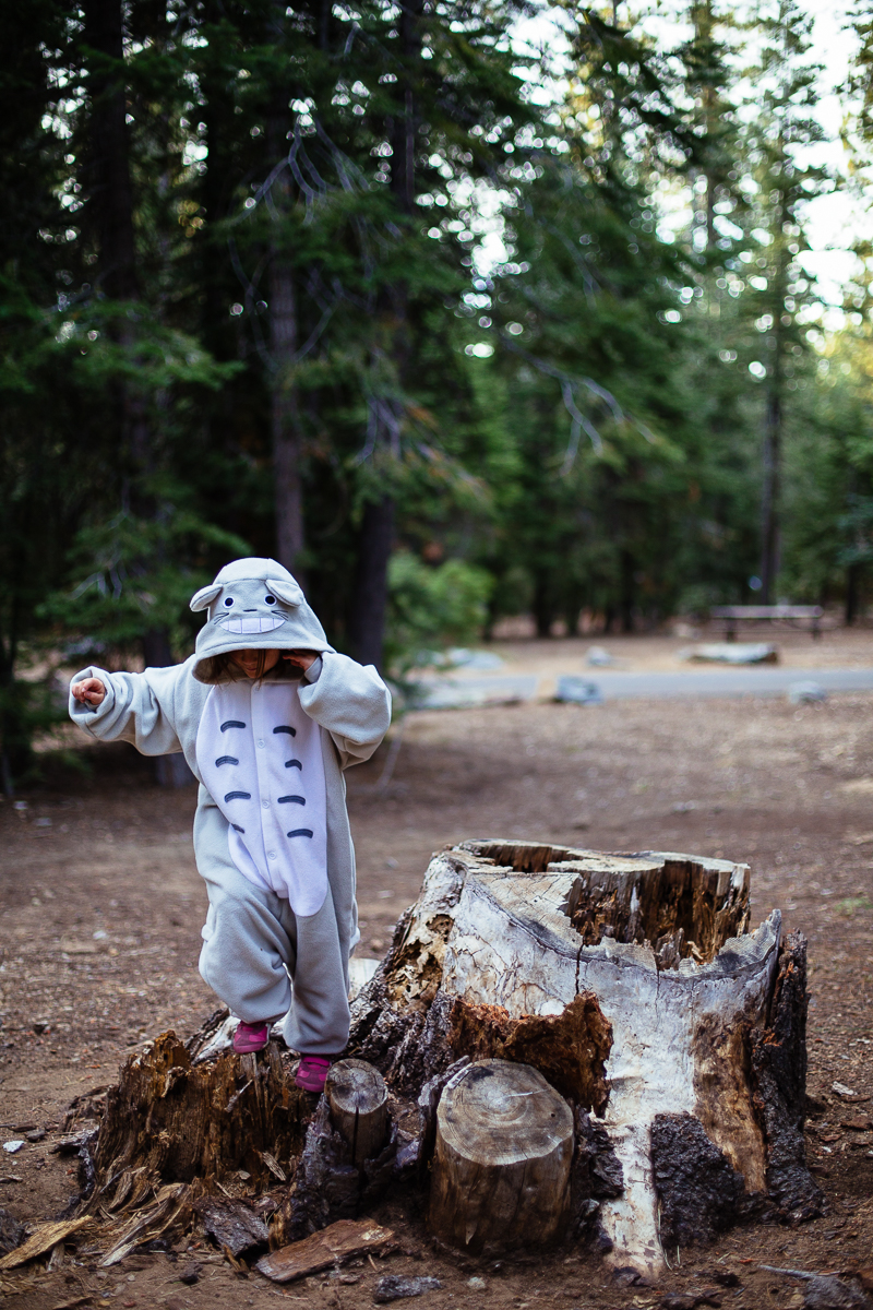 lake tahoe camping sugar pine  (10 of 61).jpg