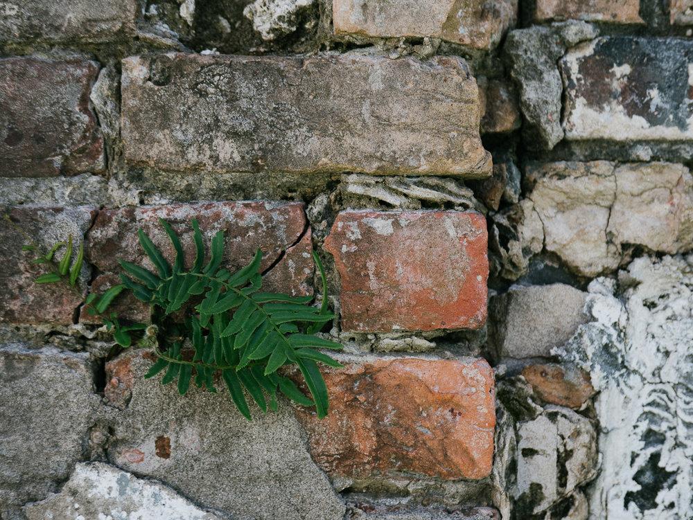 fern in brick wall