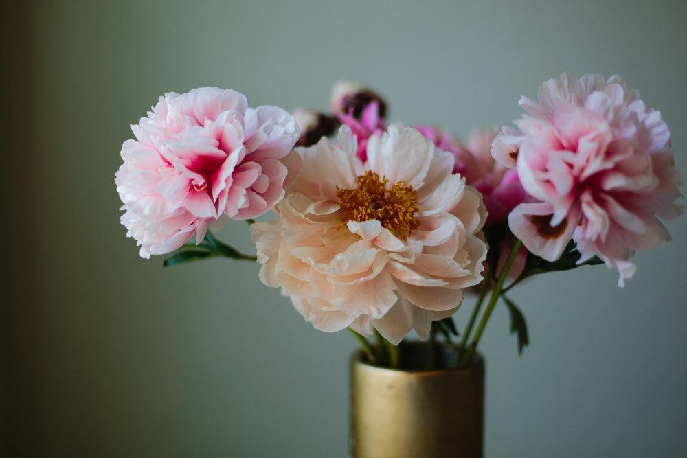 peony still life in vase