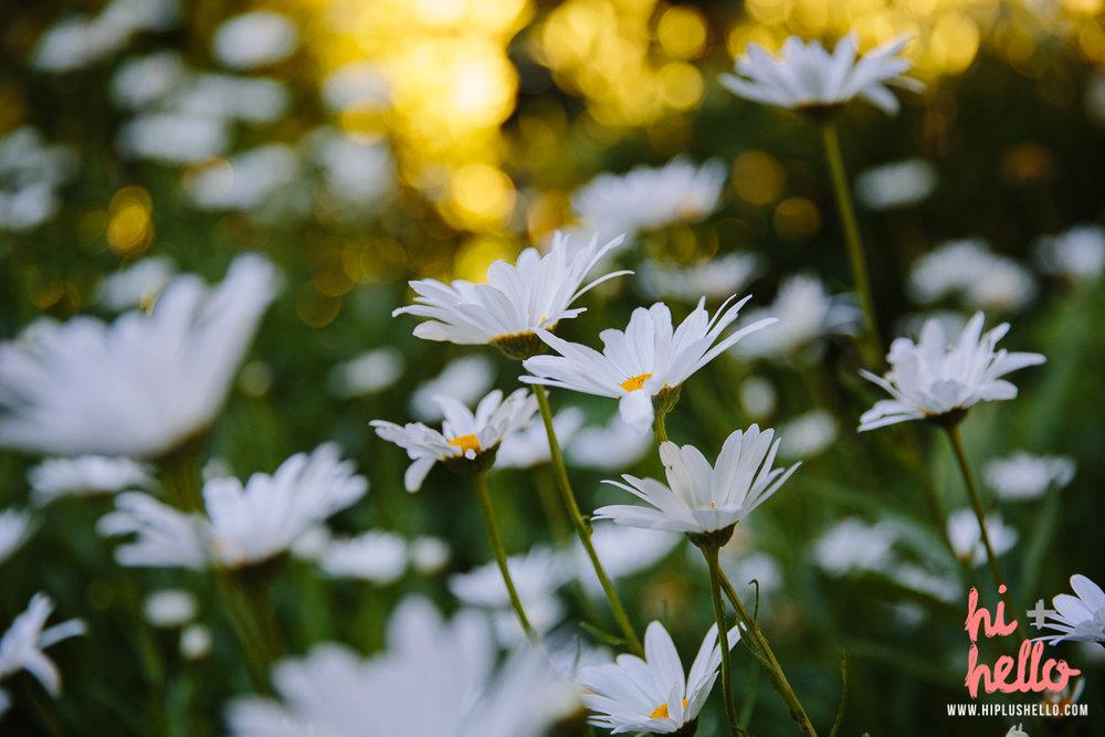 bay area wildflowers
