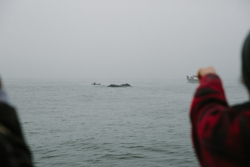 sea goddess whale watching (14 of 19).jpg