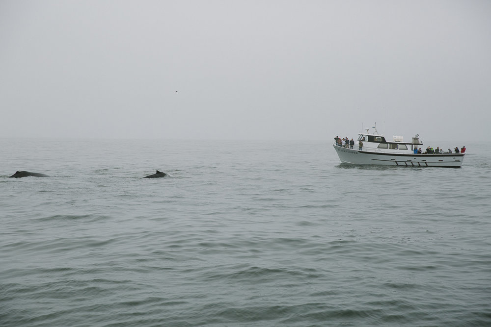 sea goddess whale watching (15 of 19).jpg