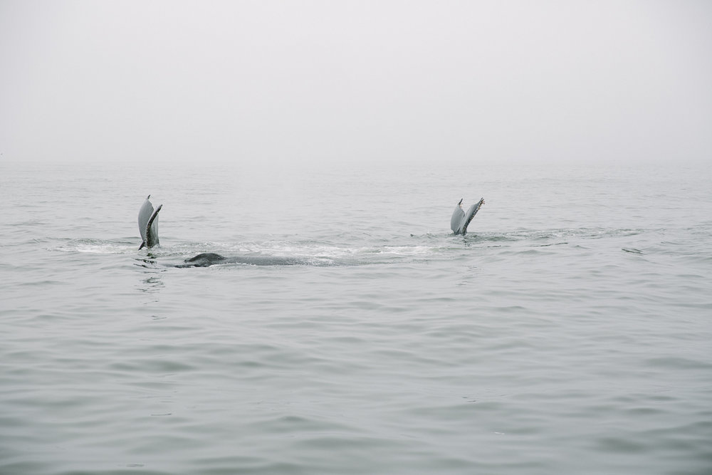 sea goddess whale watching (18 of 19).jpg