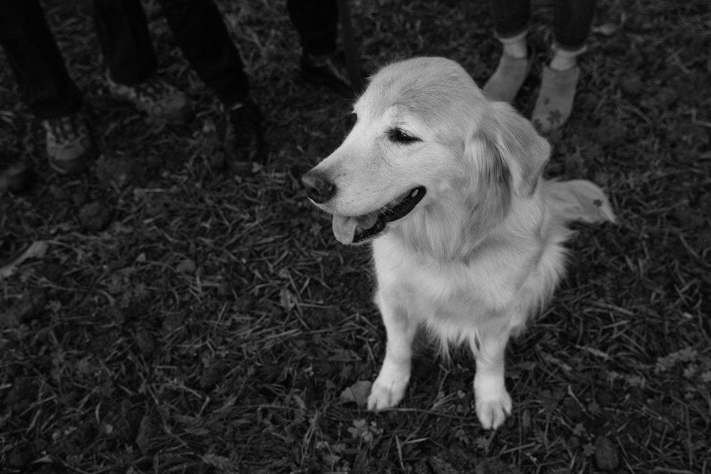 san jose dogs