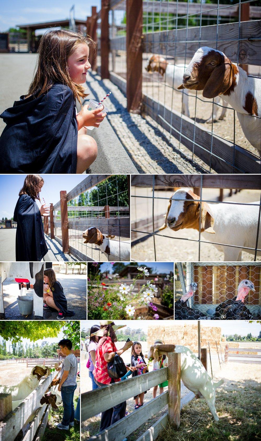 ardenwood farm goats