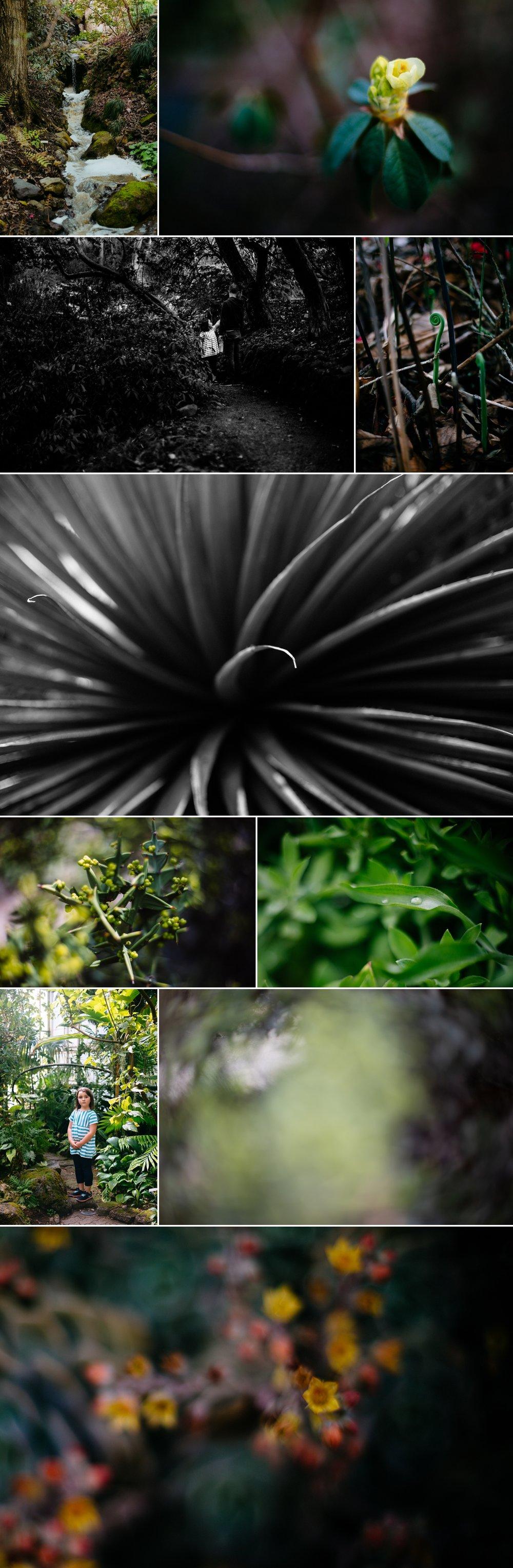 Berkeley Botanical Garden Plants