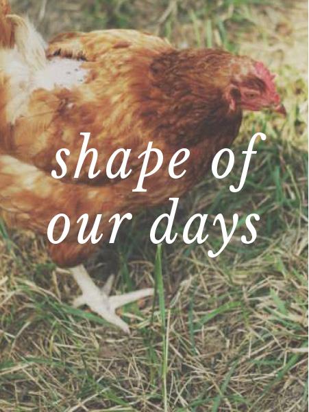 shapeofourdays.jpg