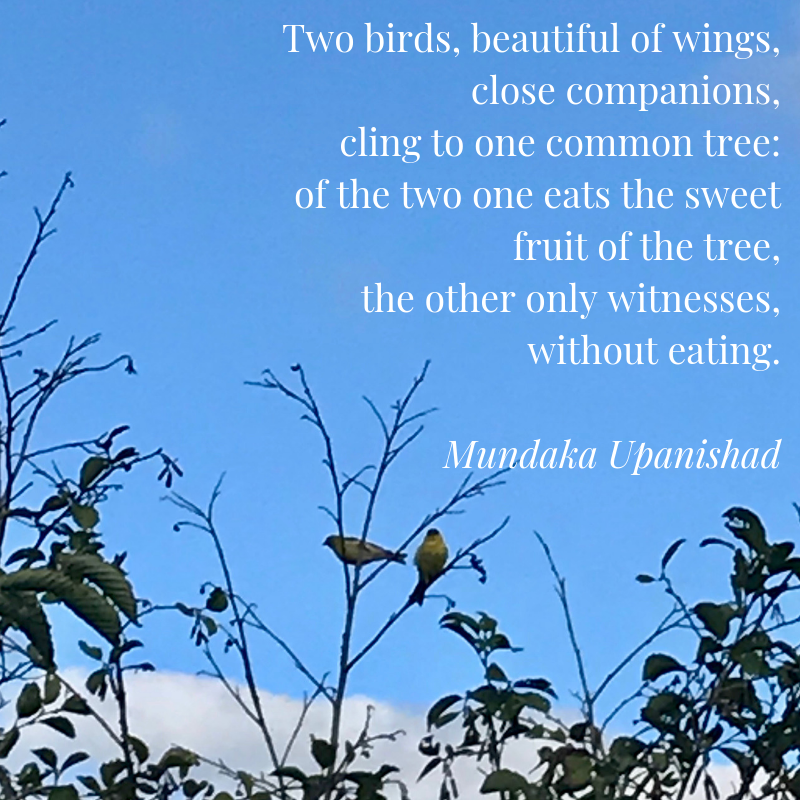 Two birds, beautiful of wings, close companions, cling to one common tree_ of the two one eats the sweet fruit of the tree, the other eats not but watches his fellow. Mundaka Upanishad-2.png