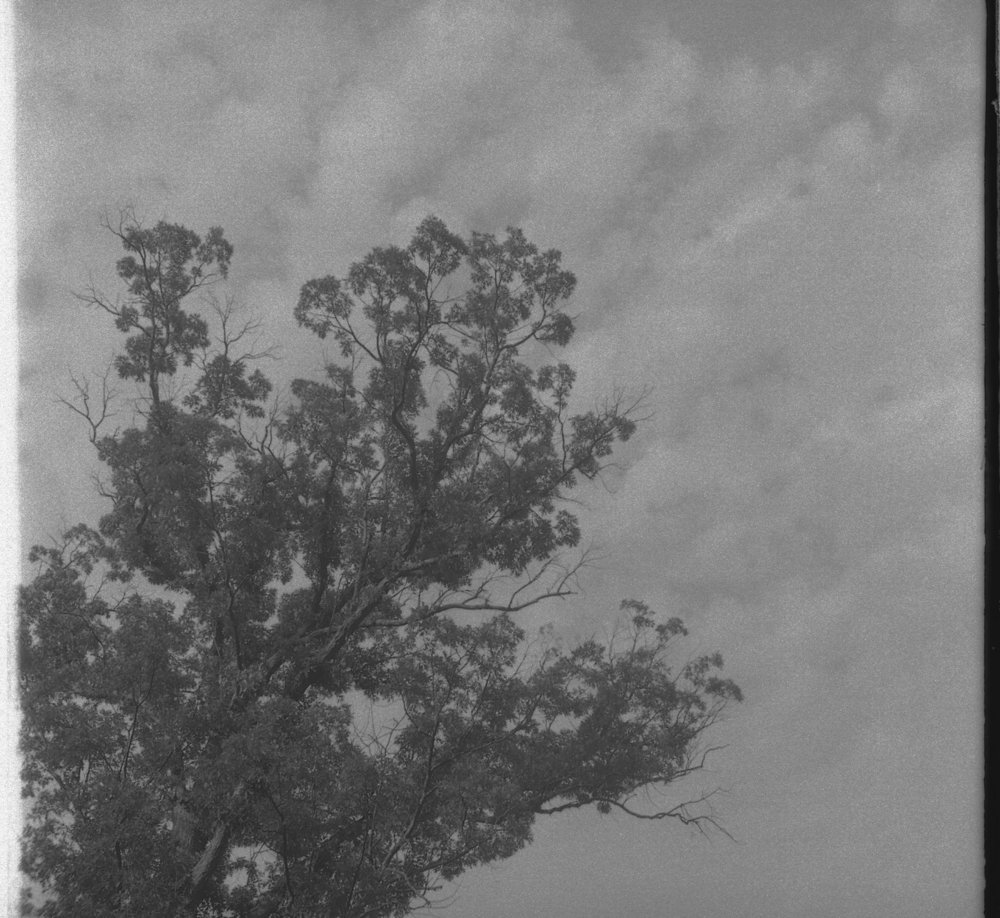 Back to the ReraPan film. I liked how the clouds seemed to be extensions of the tree. Taken on the summertime 127 Day - July 12, or 12/7 if you write your dates like that. Of course the more American wintertime 127 Day will come January 12. Shooters of 120 format film sadly only get their day just once a year January 20.