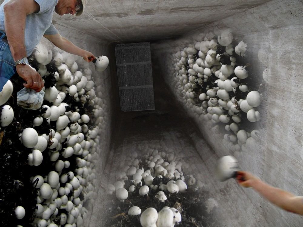 1307676658-isa-granary-silo-farm-1000x750.jpg
