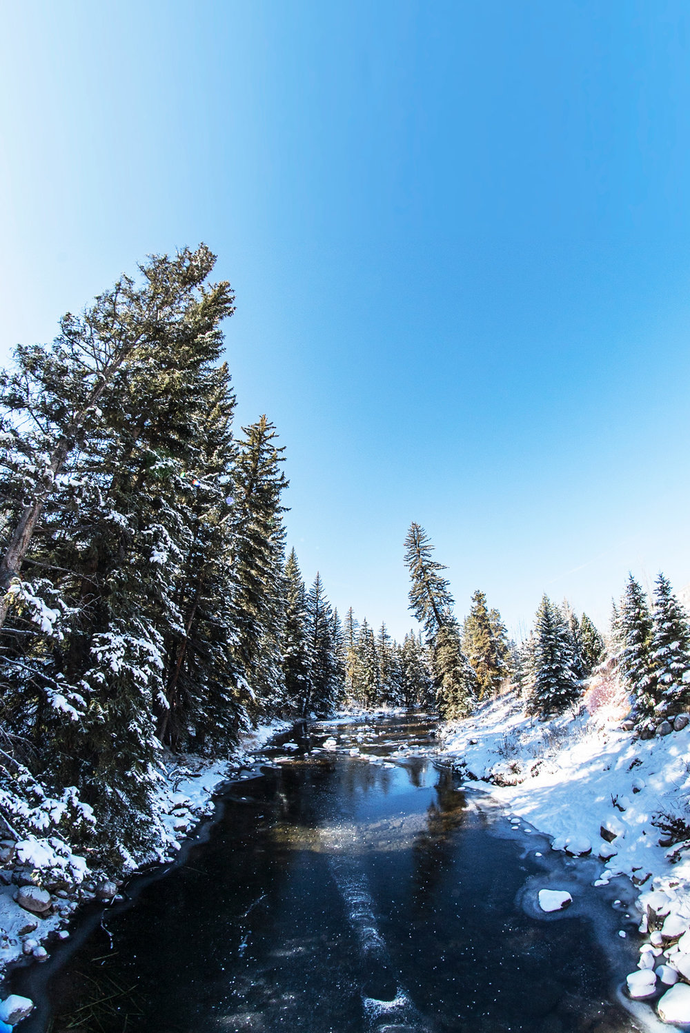 arching_colorado_river_trees_vail_pines_nature.jpg
