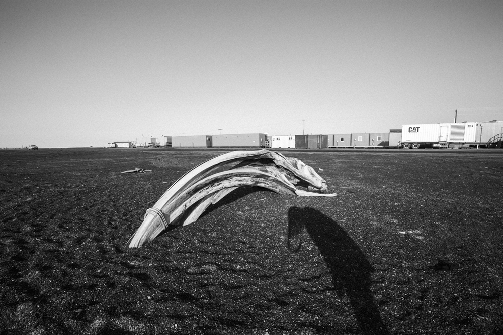 Self portrait with whale bones