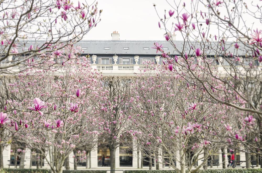 MagnoliaII.jpg