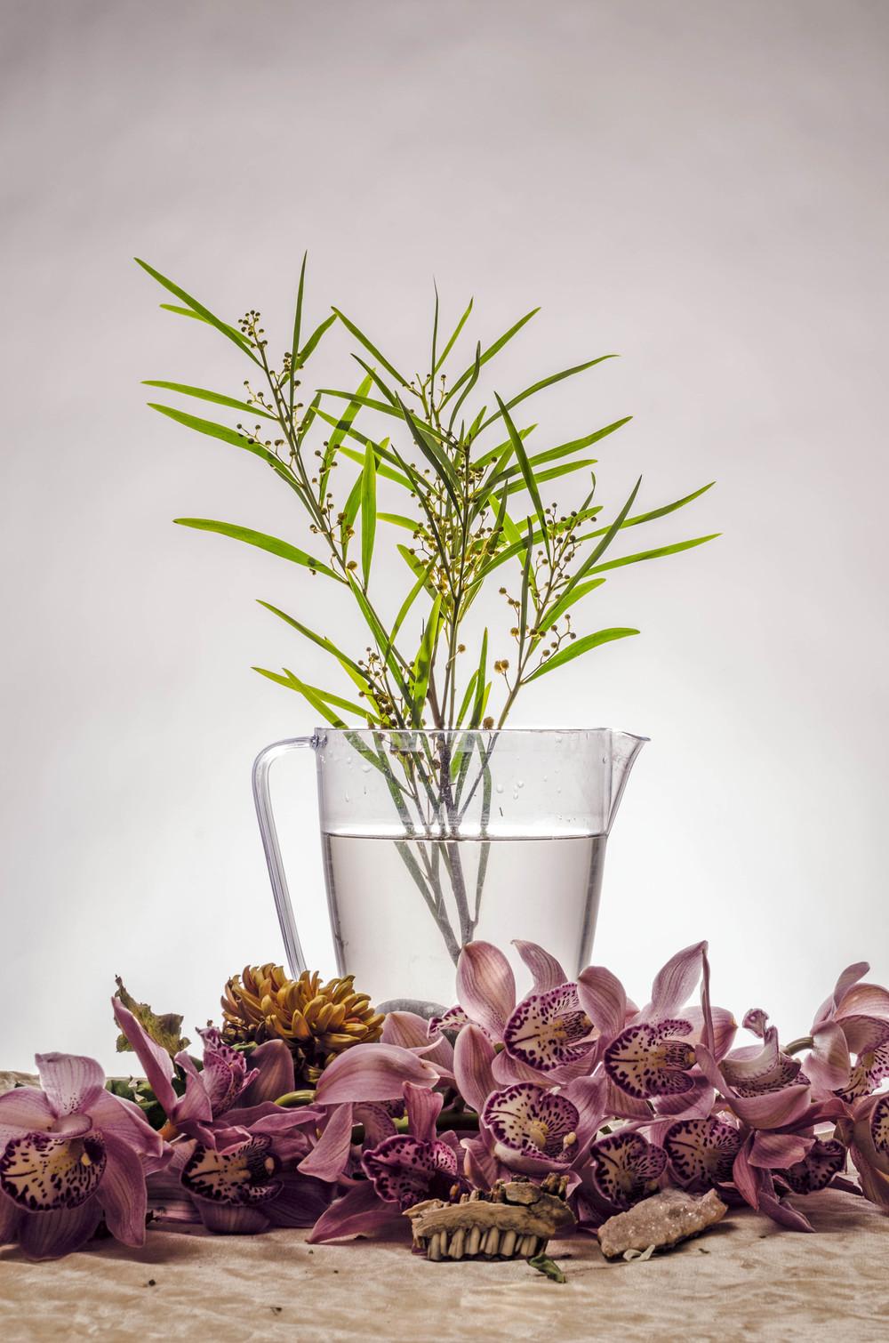 Still Life Flora