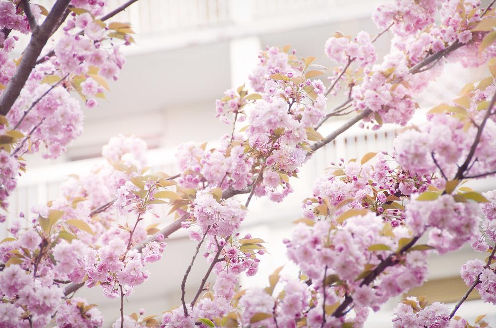 Blossoms_DSC_0452.jpg