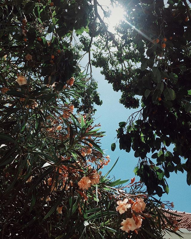 My daily meditation: looking up to notice the way the sun filters through the leaves of trees on my daily walks through the city . . . . . . . . . . . . . . . . #beauty #gratitude #visualmeditation #hypnotic #nofilter #sunrays #simplepleasures