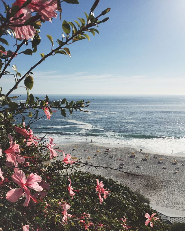 "Calendar says Autumn but you show me Spring. . 🌸🌺 . . . . . . . . . . . That I'm able to call a place of such beauty ""home"" is truly humbling. 🙏🏼 . . . . . . . . #home #mycapetown #capetownlove #capetownliving #beachflowers #hibiscus #vscocapetown #gratitude #beauty"
