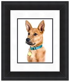 Custom Framed Dog Photography