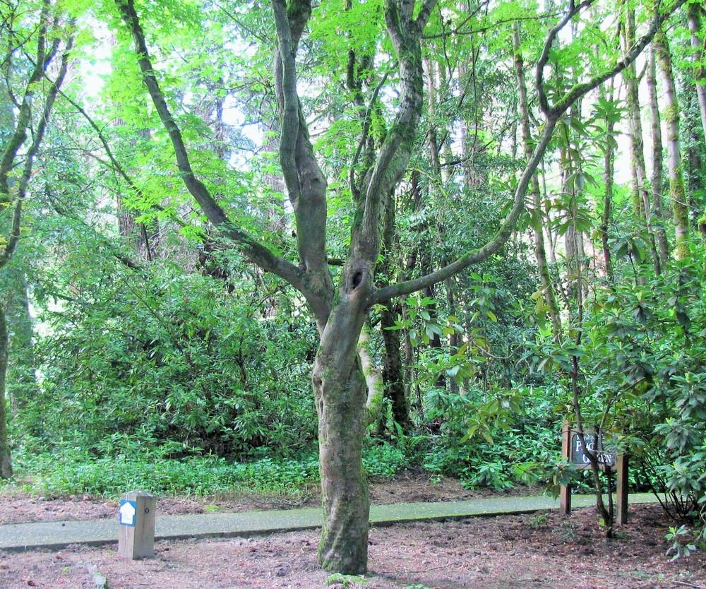 Dancing Tree on Wander Nature