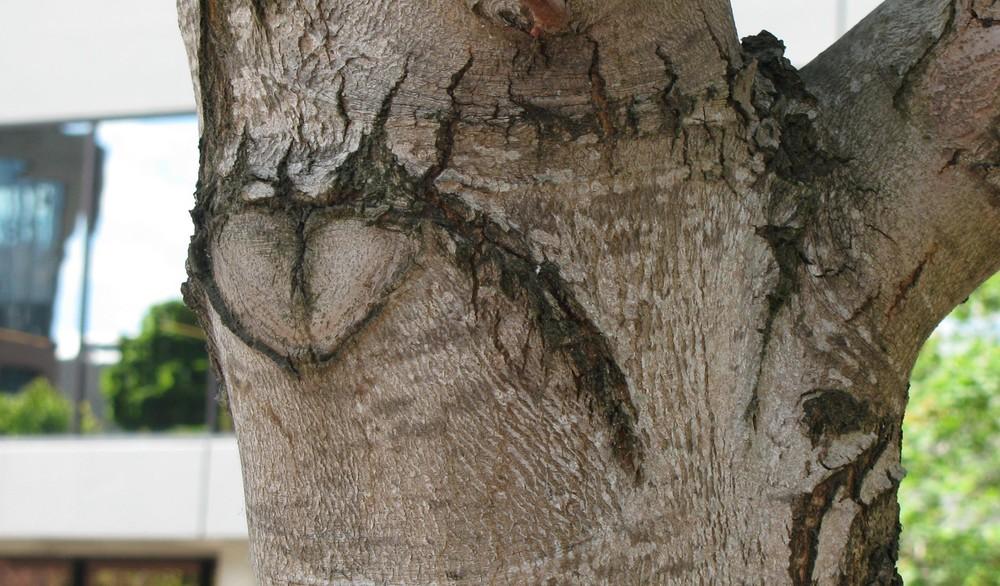 Tree Heart on Wander Nature