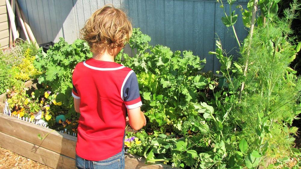 Garden School on Wander Nature