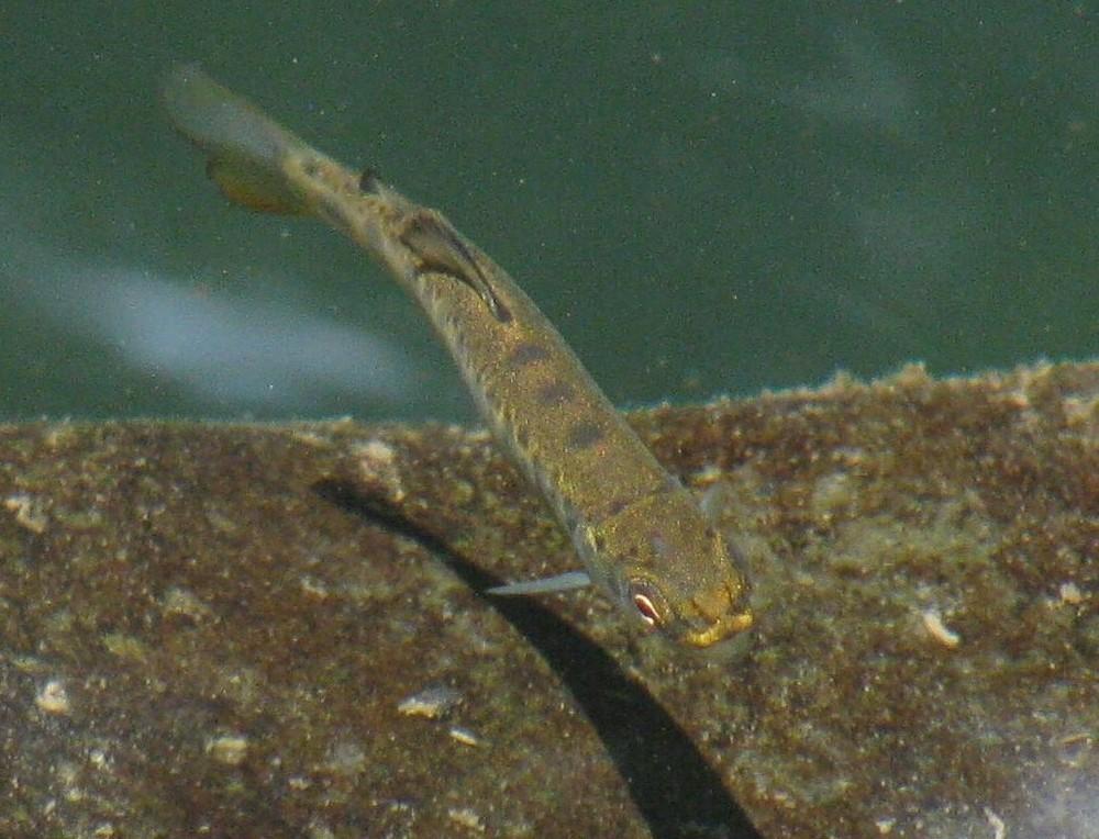 Baby Salmon on Wander Nature