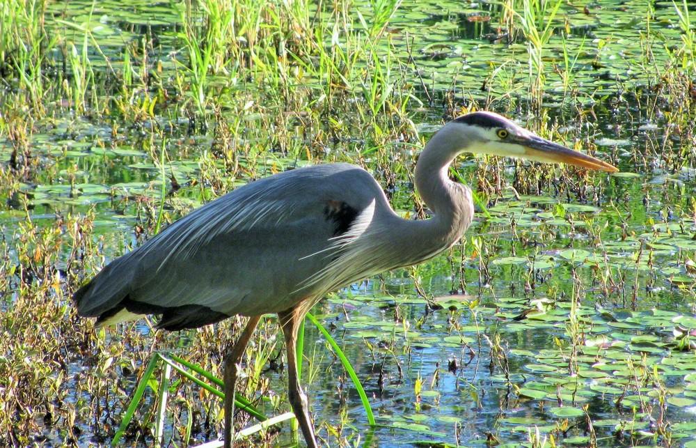 Stillness on Wander Nature