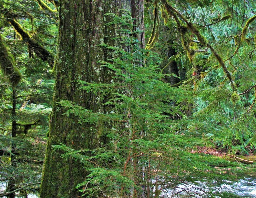 Tree Wisdom on Wander Nature