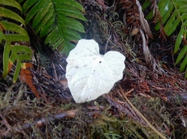 Heart Leaf on Wander Nature