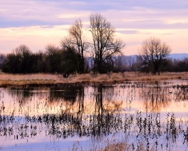 Wetlands on Wander Nature