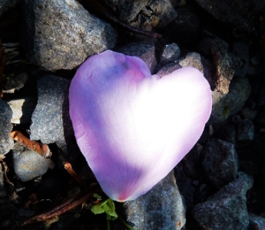Love on Wander Nature