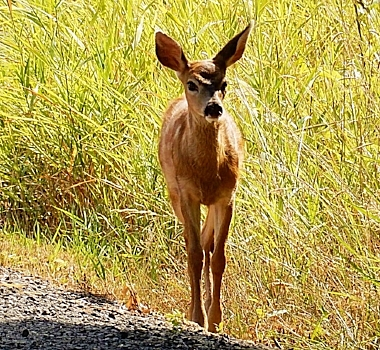 Fawn on Wander Nature