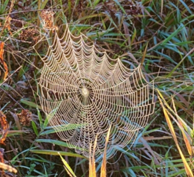 Spiderweb on Wander Nature
