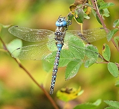 Dragonfly on Wander Nature