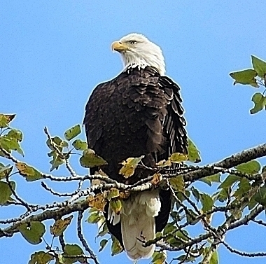 Eagle on Wander Nature
