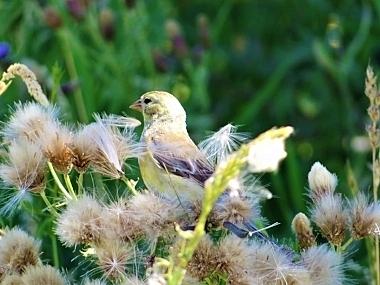 Bird on Wander Nature