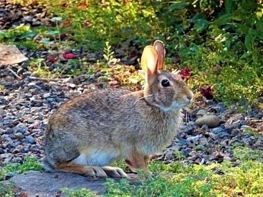 Rabbit on Wander Nature