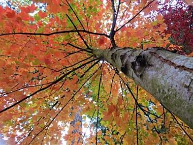 Autumn on Wander Nature