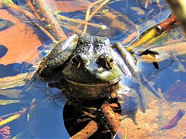 Frog on Wander Nature