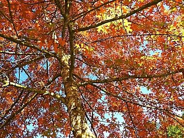 Autumn Leaves on Wander Nature