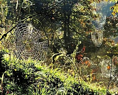 Spiderwebs on Wander Nature