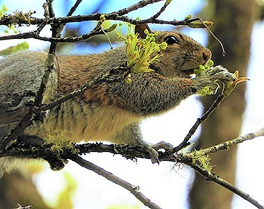 Squirrel on Wander Nature