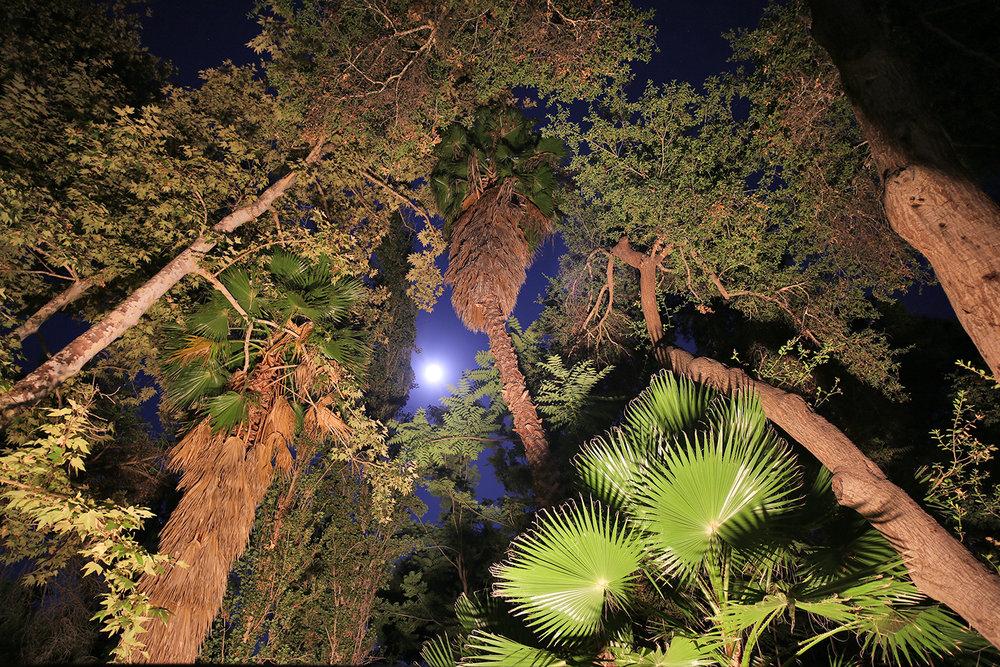 woods_moon.jpg