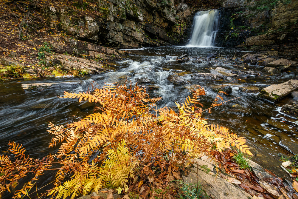 Ettinger Falls with Fall Plant.