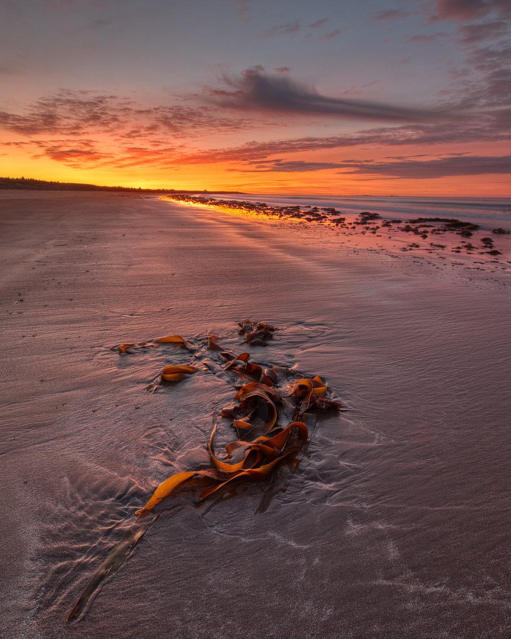 Seaweed on Conrads Beach
