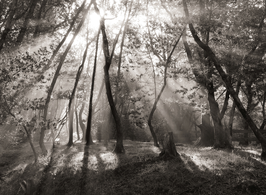 Morning-Misty-Forest-Light_sm.jpg