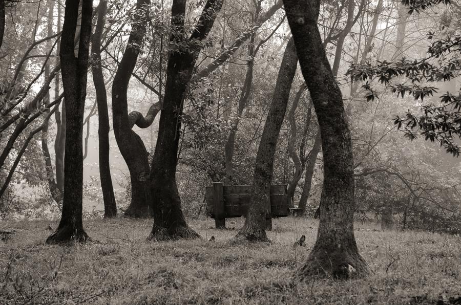 Misty-morning-forest_sm.jpg