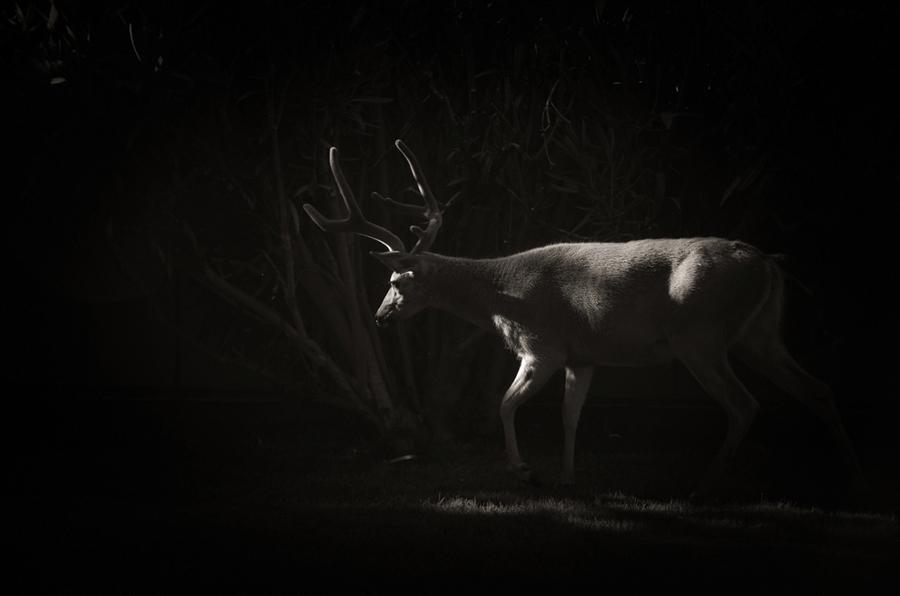 Mature-Buck_sm.jpg