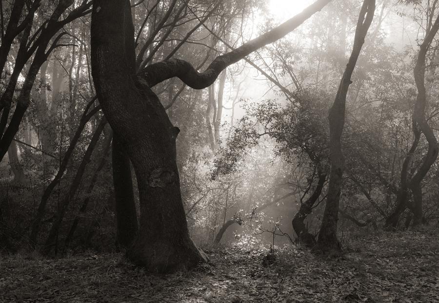 Forest-misty-light-bw-V_sm.jpg