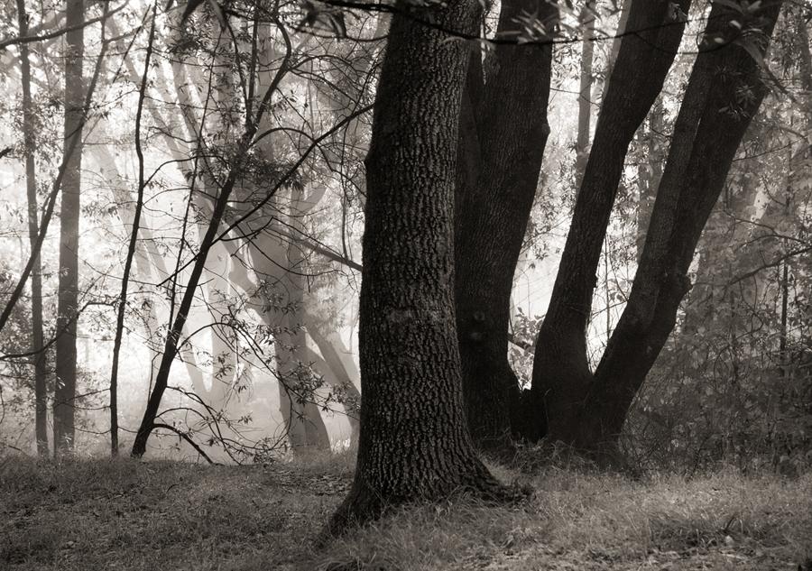 Forest-misty-light-bw-IV_sm.jpg